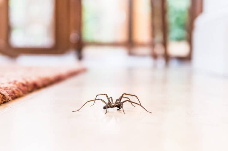 Inviting Pests at Your Interior? What You Should Avoid!